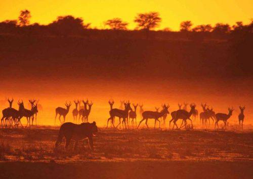 Tanzania: tra mare, safari e cultura